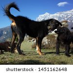 dogs family in high himalayas... | Shutterstock . vector #1451162648