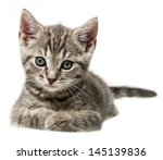 Stock photo  cute little kitten portrait 145139836