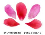 Stock photo red and pink peony petals set isolated on white background closeup 1451645648