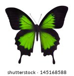 Stock photo macro photo of green butterfly isolated on white background 145168588