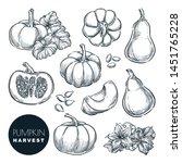 Pumpkins Sketch Vector...