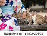 Stock photo rabbit island in hiroshima japan 1451920508