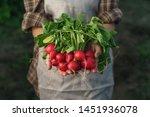 farmers holding fresh radish in ... | Shutterstock . vector #1451936078