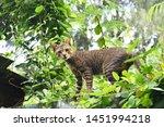 Tabby Cat Walking In Green Lea...