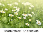 beautiful sunny daisy flowers ... | Shutterstock . vector #145206985