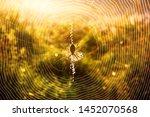 Spider Wasp Argiope Bruennichi...