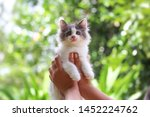 Stock photo beautiful kitten on the palm asian woman is stroking a small kitten 1452224762