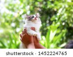 Stock photo beautiful kitten on the palm asian woman is stroking a small kitten 1452224765