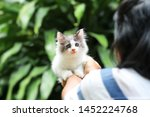 Stock photo beautiful kitten on the palm asian woman is stroking a small kitten 1452224768