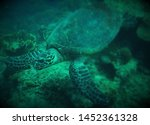 atmospheric image of a turtle... | Shutterstock . vector #1452361328