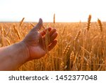 farmers hand touches the ear of ... | Shutterstock . vector #1452377048