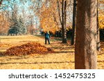 Woman Cleans Autumn Leaves In...