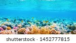 Beautifiul Underwater Panoramic ...