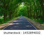 Trees Arching Over Road With...