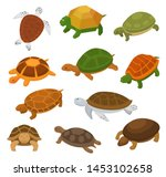 Stock vector turtle vector cartoon seaturtle character swimming in sea and tortoise in tortoise shell 1453102658