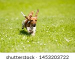 Stock photo dachshunds puppy are playing on the grass 1453203722