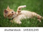 Stock photo little cat playing in grass selective focus shallow dof 145331245