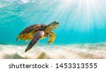 Stock photo photo of sea turtle in the galapagos island 1453313555