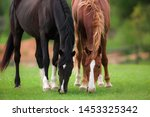 Two Black And Red Brown Horses...