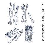 asparagus collection botanical... | Shutterstock .eps vector #1453343135