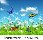 summer field   Shutterstock .eps vector #145361896