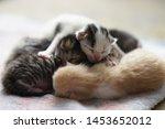 Stock photo cute newborn kittens sleeping baby animals sleep 1453652012