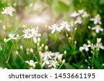 paul farge or summer snow  ... | Shutterstock . vector #1453661195