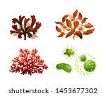 set coral seaweed underwater... | Shutterstock .eps vector #1453677302