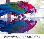Green Winged  Red  Macaw Parro...