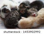 Stock photo cute newborn kittens sleeping baby animals sleep lovely family 1453902992