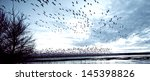 Many Birds Taking Flight In Th...
