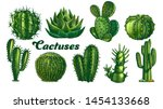 collection desert plants cactus ... | Shutterstock .eps vector #1454133668