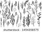 wild herbs and flowers painted... | Shutterstock .eps vector #1454358575