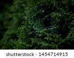 Details Of A Spider Web In A...