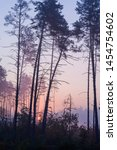 Small photo of Sunrise in a foggy forest. Autumn landscape with rising sun and fog. Pines and fog.