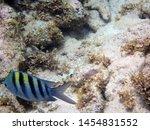 underwater figurine of  a...   Shutterstock . vector #1454831552