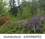 fleeting alpine flowers in the summer time