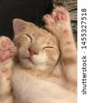 Stock photo the life of a kitten this tired kitten has seven toes on each mitten 1455327518