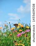 Monarch Butterfly In Wildflower ...