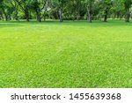green lawn in the morning with... | Shutterstock . vector #1455639368