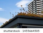 Detail of bus stop with green roof to filter air and attract bees, in the city center of Utrecht Netherlands