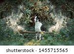 Stock photo  portrait of dog dog sitting 1455715565