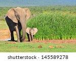 Stock photo elephants 145589278