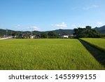 rice paddy. Farm village in Goryeong-gun, South Korea.
