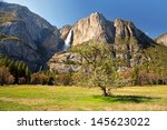 Blossoming Tree In Yosemite...