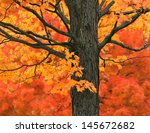 New England Autumn Trees