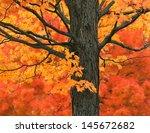 New England Autumn Trees