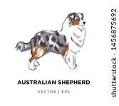 Tricolor Australian Shepherd...