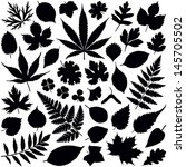 leaf collection   vector... | Shutterstock .eps vector #145705502