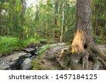 beautiful forest in lillomarka...   Shutterstock . vector #1457184125